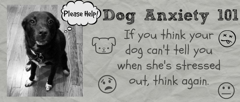 Dog Anxiety Banner
