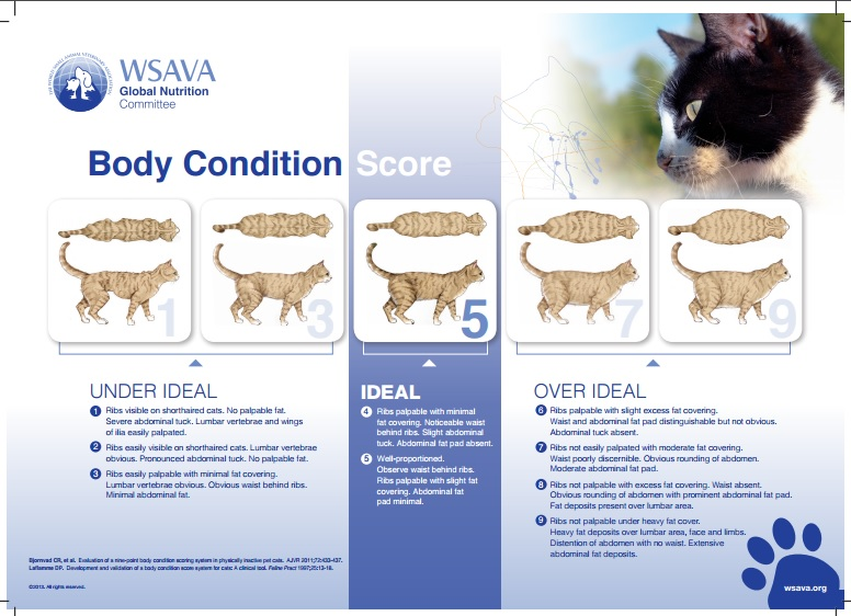 Is Your Pet At A Healthy Weight