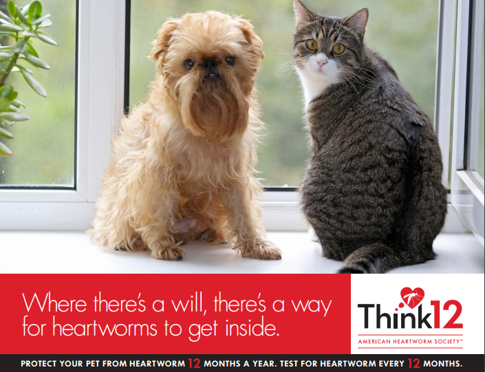 Photo provided by the American Heartworm Society